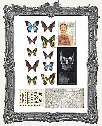Tim Holtz - Idea-ology - 2021 Halloween Transparencies