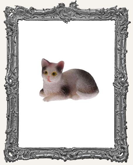 Miniature Black And White Cat Sitting