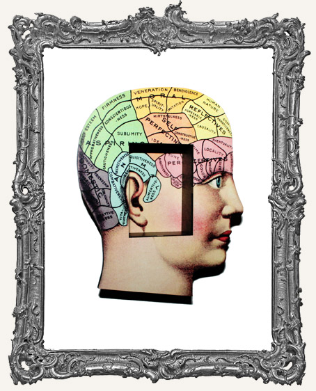 Anatomy Shrine Kit - Phrenology Head