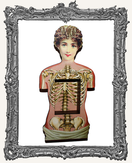 Anatomy Shrine Kit - Victorian Torso