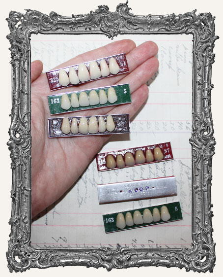 Vintage Resin Teeth Models