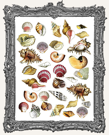 33 Vintage Seashells Paper Cuts