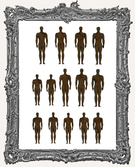 Anatomical Position Men Cut-Outs - 14 Pieces