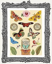 Stamperia Colored Wooden Shapes - Amazonia Butterfly