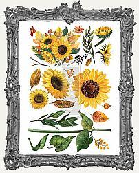Prima Marketing Re-Design Small Decor Transfers - Sunflower Afternoon