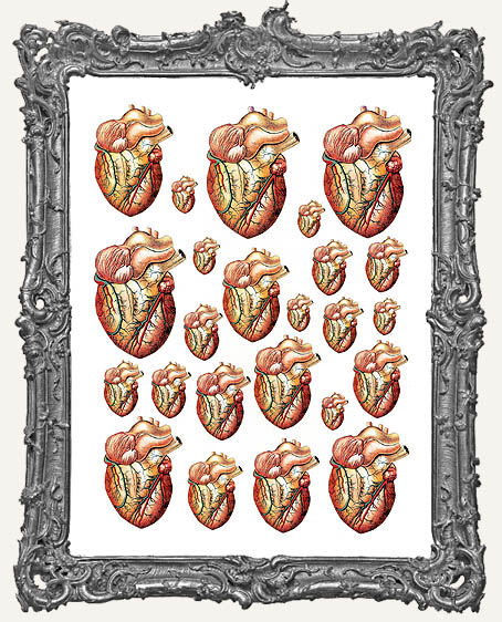 24 Heart Anatomy Paper Cuts