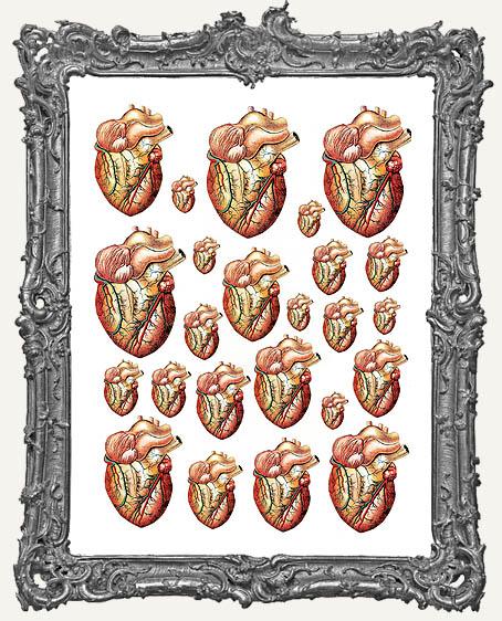 24 Heart Anatomy Paper Cuts