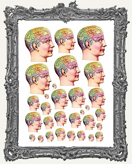 30 Phrenology Head Anatomy Paper Cuts
