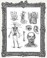 Tim Holtz Cling Mounted Stamp Set - Cadaverous