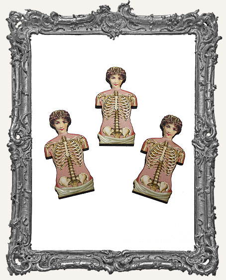 Anatomy Victorian Torso Masonite Cut-Outs - Set of 3