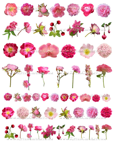 Sweet Pink Flowers Collage Sheet by Cassandra VanCuren - CV20