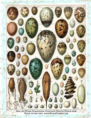 Eggs and Other Curiousities Digital Collage Sheet