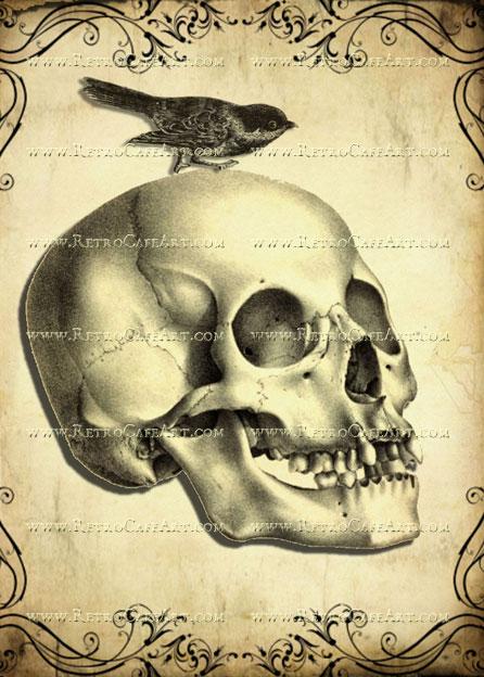 5 x 7 Skull Image by Debrina Pratt - DP199