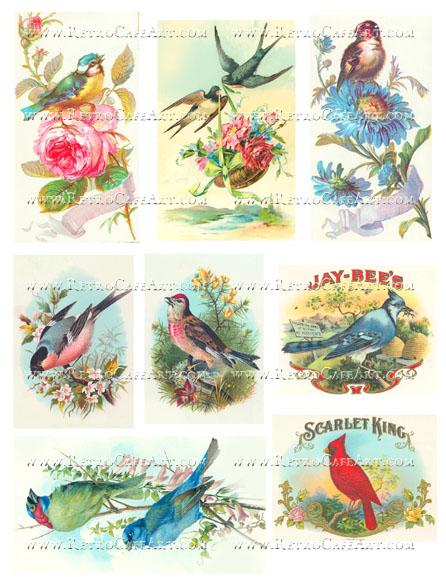 Pretty Bird Collage Sheet by Cassandra VanCuren - CV107