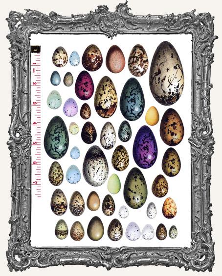 46 Egg Paper Cuts