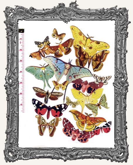 20 Moth Paper Cuts