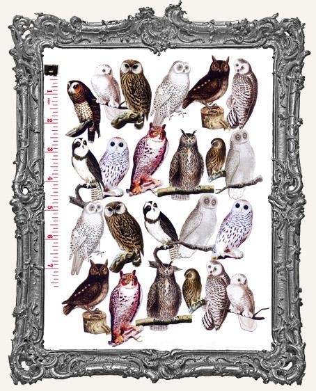 24 Owl Paper Cuts