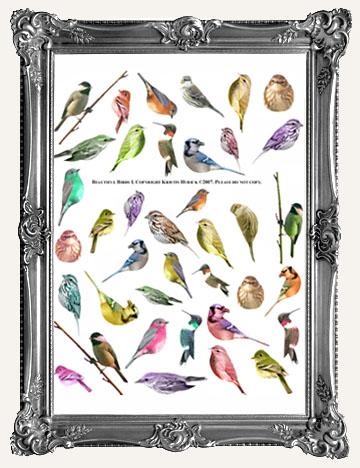 BUTTERFLIES, MOTHS, BIRDS, EGGS, and ANIMALS